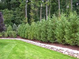 Best 25+ Privacy landscaping ideas on Pinterest   Privacy trees ...