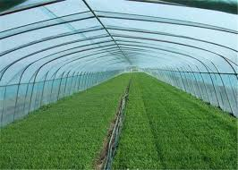 uv resistant greenhouse plastic sheeting. Wonderful Resistant Soft Uv Resistant Greenhouse Plastic Window Film Less Demand For Watering On Sheeting 6