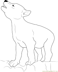 Small Picture Wolf Coyote Coloring Page Free Coyote Coloring Pages