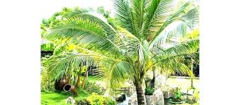 artificial outdoor palm trees artificial outdoor plants palm trees for outside tree like artificial outdoor palm artificial outdoor palm trees