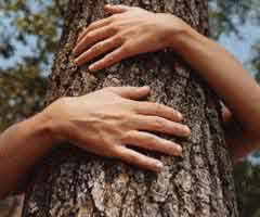 Image result for tree hugger
