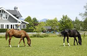 Country Kitchen Lebanon Ohio Dayton Area Horse Properties Equestrian Properties For Sale In Ohio