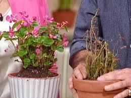 happy houseplants best office plants no sunlight