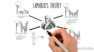 Theory Of Evolution Darwin Lamarck