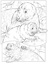 Small Picture Leopard seal coloring pages download and print for free