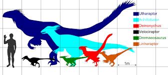Velociraptor Size Chart File Sizecomp Dromaeosaurs Jpg Wikimedia Commons