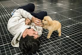 Puppies By Design Indiana Reviews For The Scene Stealers Of The Curious Incident A Happy