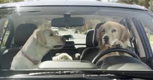 2018 subaru dog commercial.  commercial subaru commercial of dogs driving is extremely hilarious inside 2018 subaru dog c