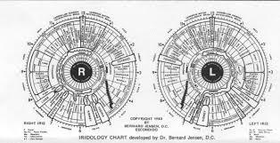 Dr Bernard Jensen Iridology Chart Hbi Homoeopathy And Iridology