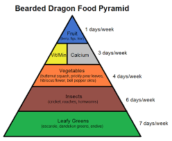 Bearded Dragon Nutrition Chart Bearded Dragon Food Pyramid Complete Critter