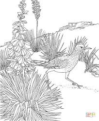 Small Picture Roadrunner coloring pages Free Coloring Pages