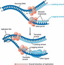 ap chapter molecular basis of inheritance detailed