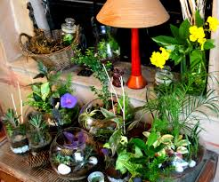 Terrariums noida ozziesterrariums Indoor plants arrangement ideas