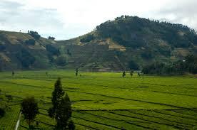 hotel rwanda review essay essay lib essaylibreview essaylib  hotel rwanda essay hotel rwanda movie review essay