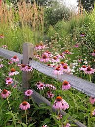 Amazing Wildflower Garden Design Home Decoration Ideas Designing Extraordinary Wildflower Garden Design Gallery