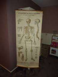 Human Skeleton Wall Chart English School Poster With The Human Skeleton Anatomical