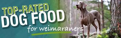 Best Dog Food For A Weimaraner Diet Feeding Guide