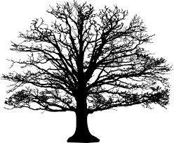 Branches Without Leaves Clipart Auto Electrical Wiring Diagram