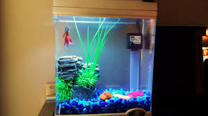 Cool Aquariums Cool Small Fish Tanks Roselawnlutheran
