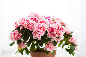 Great office plants Indoor Plants Indoor Office Plants Dont Just Brighten Up Your Building Make It Seem More Inviting And Help To Promote More Professional Image To Your Visitors The Hathor Legacy The Health Benefits Of Office Plants Phs Greenleaf