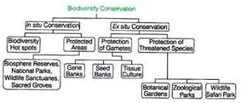 essay on biodiversity environment biodiversity conservation