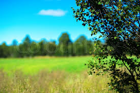 simple nature background. Perfect Background Simple Forest With Bokeh Tree Landscape Background Hd  Stock Photo  Colourbox To Nature Background R