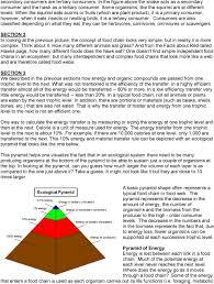 food web pyramid food chains food webs and ecological pyramids pdf