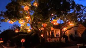 california s pioneer cabin tree aka tunnel tree has fallen chandelier pleasant chandelier tree