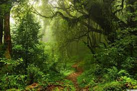 Path in Wild Green Forest HD wallpaper ...