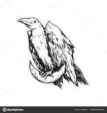 белая ворона сидя луне полумесяц ворона графический оригинальные