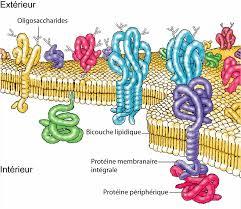 """""""Biologie Cellulaire"""" Structure Générale de la Cellule (Documentaire) - Jérôme Gay-Quéheillard (repris par Moesius) Images?q=tbn:ANd9GcRkLPH6ufPSkFUAPL8yzMxWM30v2QBwFCOXZtRKKGXWKNFzY2uv"""