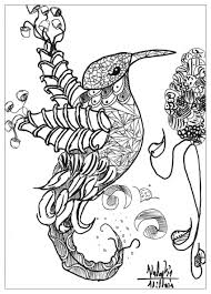 Adult Bird Coloring Pages Boston Cross