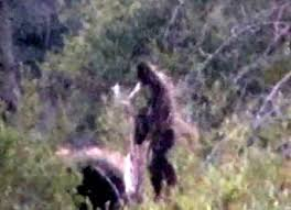 Image result for bigfoot on the mountain