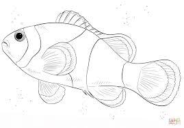 Disegno Di Pesce Pagliaccio Da Colorare Disegni Da Colorare E Con