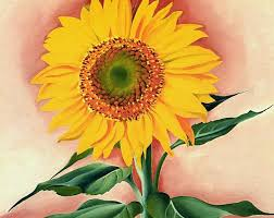 a sunflower from maggie 1937 georgia o keeffe