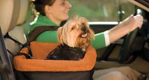 top best car seats for dogs