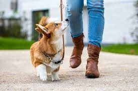 子犬 散歩 時間