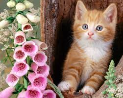 cute cats wallpapers free download. Delighful Wallpapers Beautiful Cats Hd Wallpapers Inside Cute Free Download E
