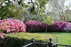 file azalea s at houston s river oaks garden club jpg