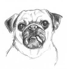 pencil drawing of a pencil. pencil drawings of dogs, dogs drawing a r