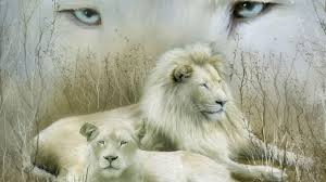3d lion wallpapers free download.  Download FunMozar U2013 A Curiosity Of Nature The White Lion For 3d Wallpapers Free Download B