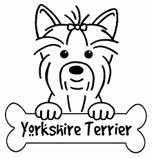 Can you give it some color? Yorkie Coloring Pages Best Coloring Pages For Kids