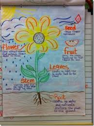 Parts Of A Flower Anchor Chart Science Anchor Charts