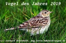 """Zehn vogelarten kämpfen um den titel """"vogel des jahres 2021. Turteltaube Vogel Des Jahres 2020 Liste Bis 2021 Natur Beobachtungen"""