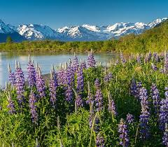 Alaska lies at the extreme northwest of the north american continent, and the alaska peninsula is the largest peninsula in the western hemisphere.because the 180th meridian passes through the state's aleutian islands, alaska's westernmost portion is in the eastern hemisphere.thus, technically, alaska is in both hemispheres. Alaska Vacations Travel Advice From Trusted Alaskans Alaska Org