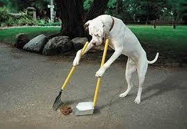 Afbeeldingsresultaat voor afbeeldingen hond en poepzakjes