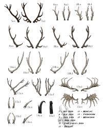 Antlers Chart 2 By Littleladybambi Fur Affinity Dot Net