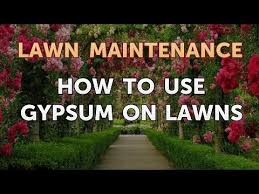 how to use gypsum on lawns