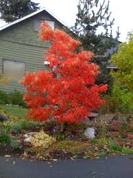 Best 25 Landscaping Trees Ideas On Pinterest  Yard Landscaping Good Trees For Backyard