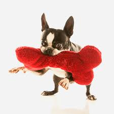 our services natural pet food and services in albuquerque nm pet vet market